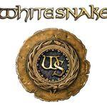 Timothy Drury paraseste Whitesnake pentru o cariera solo
